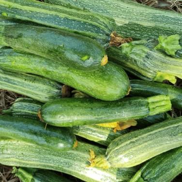 Zucchine al Kg - Monserrato...